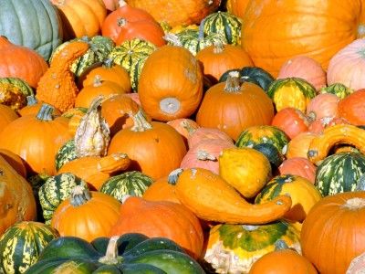 A Pile of Pumpkins and Squash