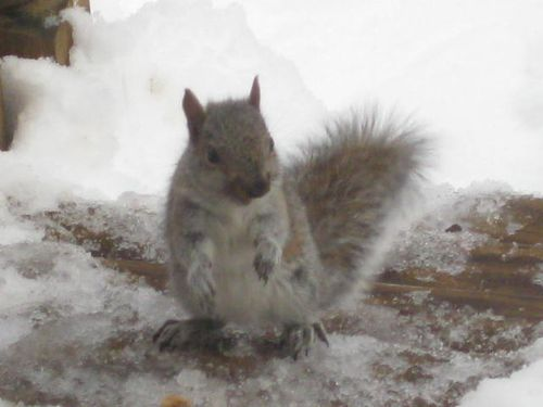 Baby squirrel after snow storm