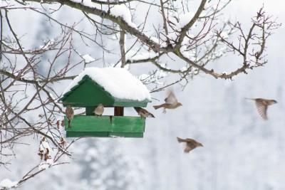 Bird house snow birds