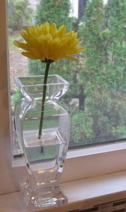 Single Flower in Vase