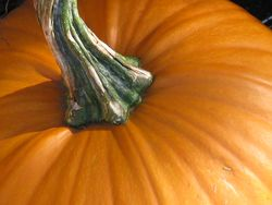 Close-up of Pumpkin with stem