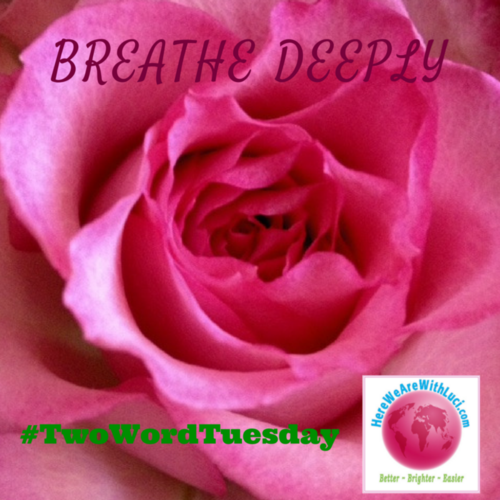 Breathe Deeply Two Word Tuesday on closeup of a pink rose