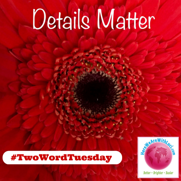 Details Matter Two Word Tuesday, red gerber daisy