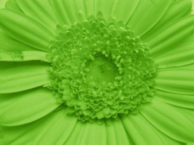Chartruese flower